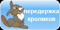 Передержка кроликов, передержка декоративных и карликовых кроликов