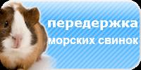 Передержка морских свинок, зоогостиница для морских свинок