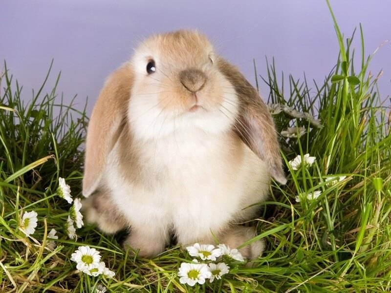 Что нужно знать когда заводишь кролика