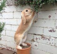 Чем нельзя кормить декоративных кроликов