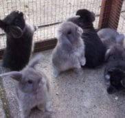 Место покупки карликового кролика