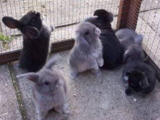 Место покупки карликового кролика, где купить кролика