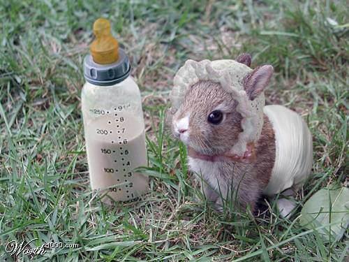 Супер карликовые кролики! Что это такое?