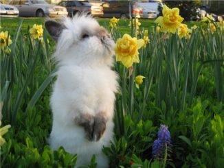 Сколько живут кролики, сколько лет живут кролики.