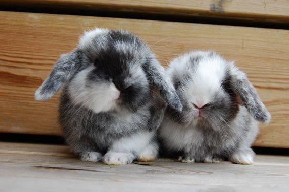Покупка карликового кролика, как выбрать кролика