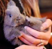Дети и карликовый кролик, что нужно знать!