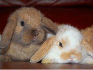 Один, два и больше кроликов
