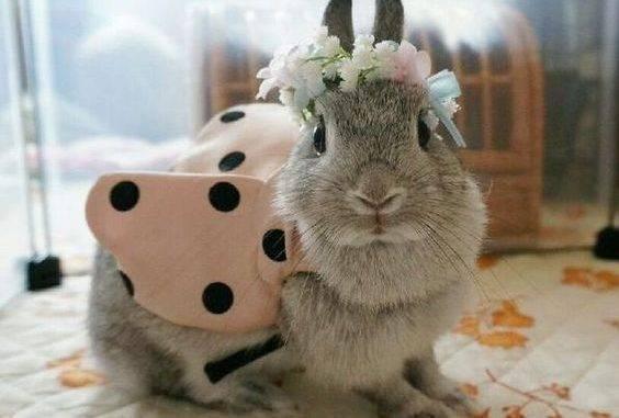 Документы на карликового кролика