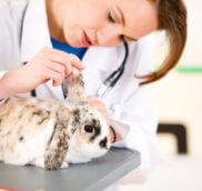 Как узнать что декоративный кролик заболел
