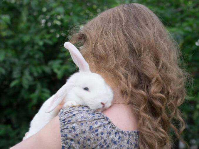 Как приручить декоративного кролика к рукам