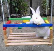 Игрушки для кроликов
