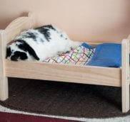 Все что нужно купить для декоративного кролика.