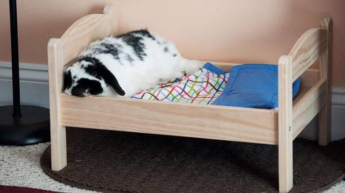 Что нужно купить для декоративного кролика.