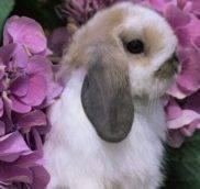 Можно ли мыть декоративных кроликов?