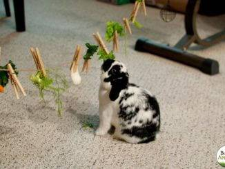 Игры и развлечения для кролика, чтобы кролик не скучал.