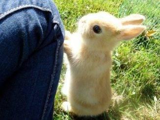 Как понять кролика, что он хочет вам сказать?