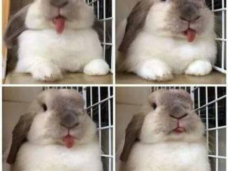 Как понимать кролика, язык кроликов