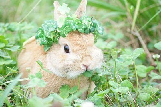 Приют для кроликов в москве, куда отдать кролика