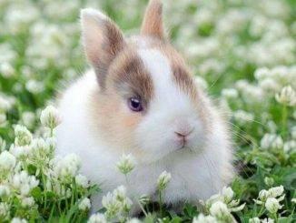 Как назвать кролика — Имена для декоративных кроликов