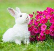 Бывает ли аллергия на декоративных кроликов?