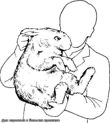Как правильно брать кролика на руки