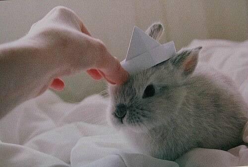 Как нужно приручать декоративного кролика