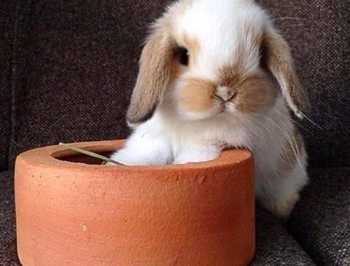 Сколько комбикорма (корма) давать кроликам