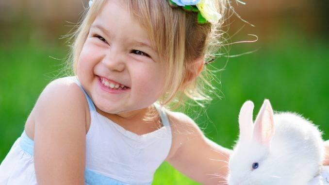 Хочу купить декоративного кролика детям на дачу