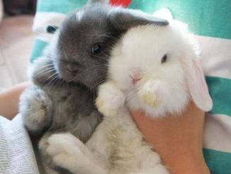 Правила покупки карликовых кроликов