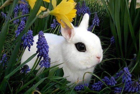 Декоративные кролики кастрировать или нет