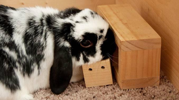 Насморк, слезящиеся глаза, чиханье у кроликов