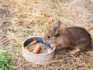 Отравление у декоративных кроликов