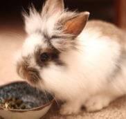 Декоративные кролики -вопрос/ответ - часть 2