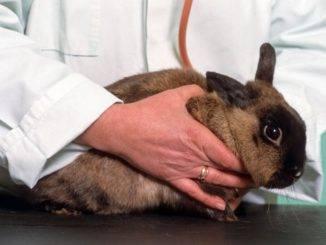 Ветеринарные клиники для кроликов