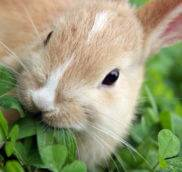 Список ядовитых комнатных растений для кроликов