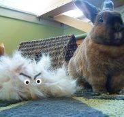 Если у кролика выпадает шерсть, что делать если у кролика выпадает шерсть?
