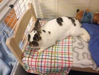 Желудочно — кишечный стаз у кроликов