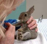 Как давать лекарства кроликам