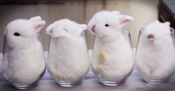 Можно ли декоративным кроликам йогурт или витамины на йогурте