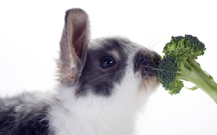 Можно ли декоративным кроликам брокколи