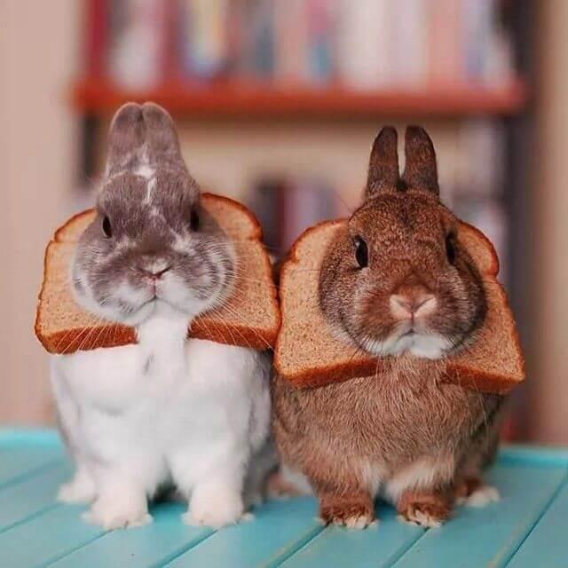 Можно ли декоративным кроликам хлеб