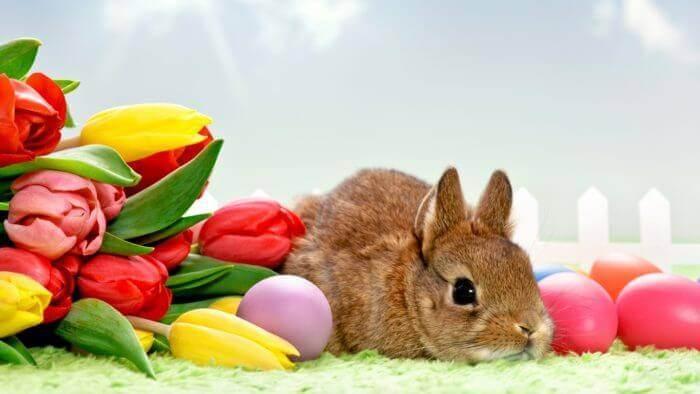 Декоративные кролики: отзывы, фото, породы, окрасы.