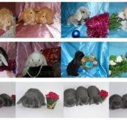 Хочу купить декоративного кролика