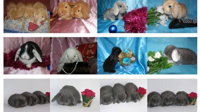 Покупка декоративного кролика