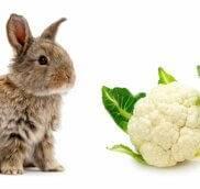 Можно ли декоративным кроликам цветную капусту