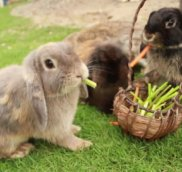 Лесные травы для кроликов