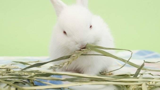 Полезная трава для декоративных кроликов