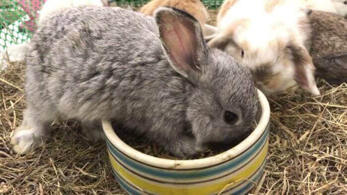 Можно ли декоративным кроликам семечки?