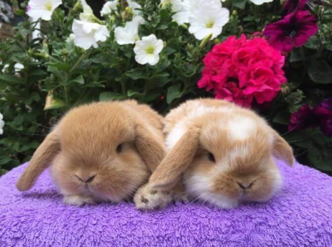 Почему в кроликов гноятся глаза