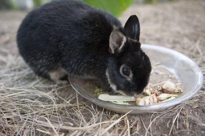 Почему декоративный кролик ничего не ест